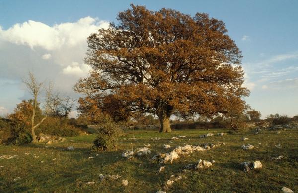 Le piante del Parco Nazionale dell'Alta Murgia, uno scrigno di biodiversità a due passi alle città.